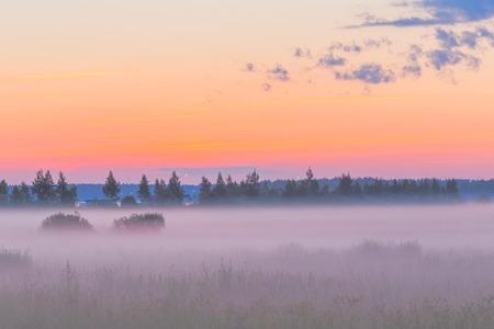 early morning: Fog in the fields landscape early morning sky