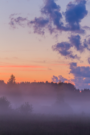 early fog: Fog in the forest early morning landscape pink sky Stock Photo