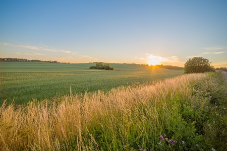 rural countryside: Sinset field rural countryside grass land agriculture Stock Photo