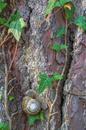 cochlea: Old tree bark texture with green plant and snail Stock Photo