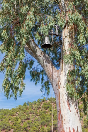 cyprus tree: Bell on the eucaliptus tree, Troodos mountains, Cyprus