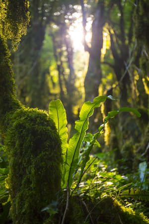 Boxwood mossy trees with sunlight Stock Photo