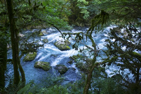 Wild forest with mountain river Stock Photo