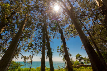 Beautiful landscape with eucaliptus trees and sunlight Banque d'images