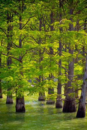 Trees standing in water beautiful view, lake Sukko, Anapa. Stock Photo
