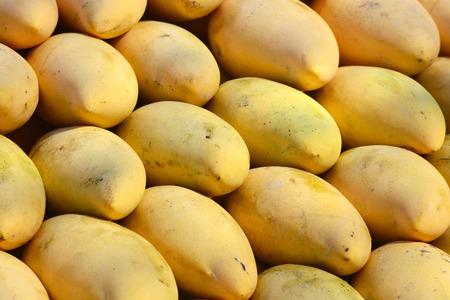 nat: golden ripe mangoes