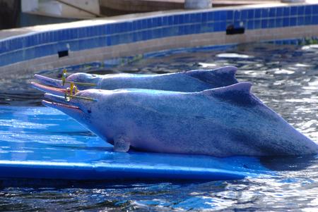 bottlenose: Bottlenose dolphins