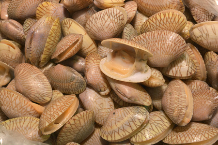 necked: Surf clam, Short necked clam, Carpet clam, Venus shell, Baby clam