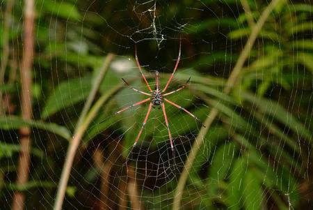 spider in the cobweb
