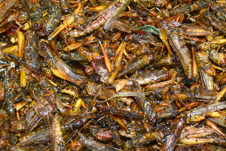 weevils: Fried insects in Bangkok ** note select focus with shallow depth of field Stock Photo
