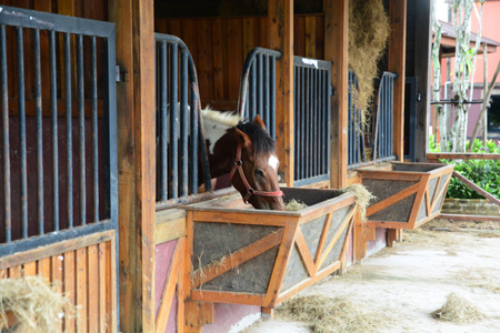 Horses in stable are eating grass.