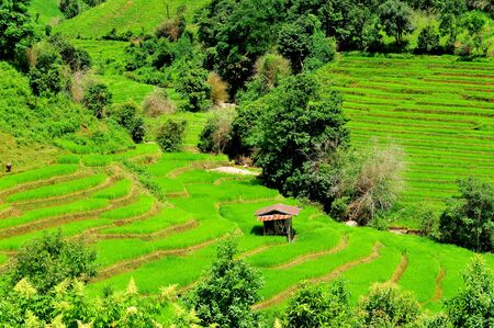 Green Terraced Rice Field in Mae Long House , Mae Chaem, Chiang Mai, Thailand. Stockfoto