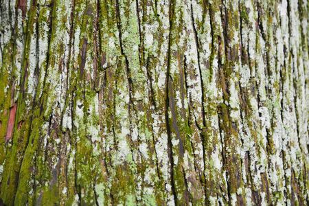 lichen is a composite organism that arises from algae or cyanobacteria living among filaments of multiple fungi species in a mutualistic relationship. Stock Photo