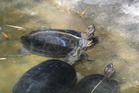turtles in pond