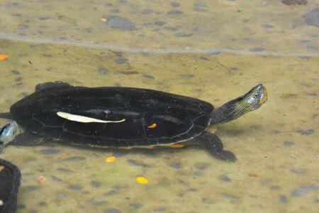 turtles in pond