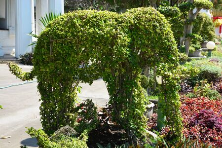 Topiary gardens. elephants created from bushes at green animals. landscape design. Grass figure of elephants, topiary figure