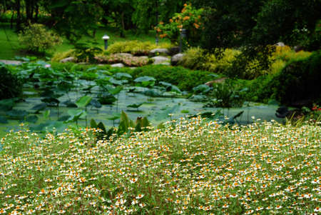 White and Yellow flowers ,Field chamomiles flowers . Beautiful nature scene with blooming medical chamomiles in garden