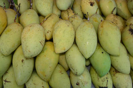 group of green mango, note  select focus with shallow depth of field