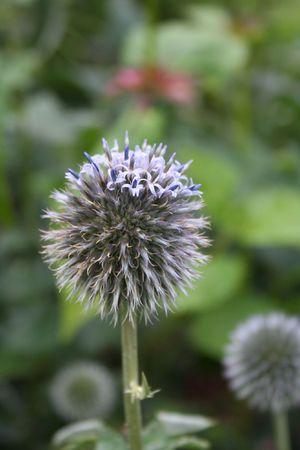 Anchorage botanic garden photo