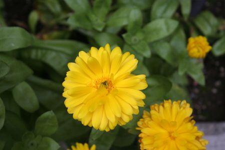 anchorage: Anchorage botanic garden
