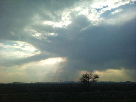 砂漠地帯、雲の切れ間から太陽の光で唯一ツリー