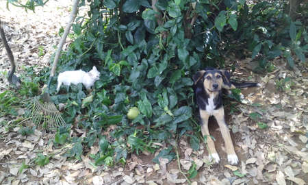 peculiar: Peculiar friendship, preparndose kitten to play with your canine friend