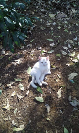 Cat resting in peace under the shade of a tree, in a peculiar position that hardly see in a cat. Imagens