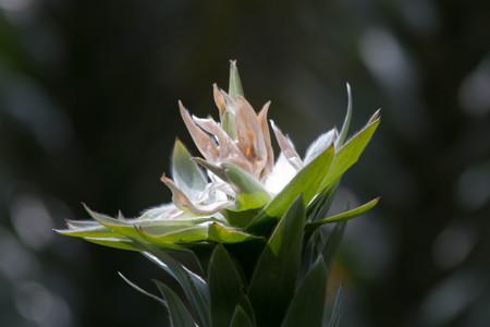 Close up of Flower against dark background