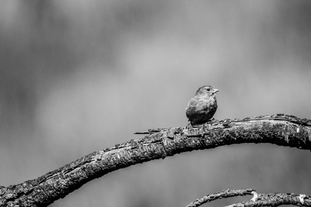 Black and white bird sitting on a branch Stock Photo