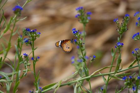 Orange Butterfly sitting on purple flower Stock Photo