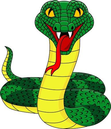 king cobra: Angry snake  Illustration