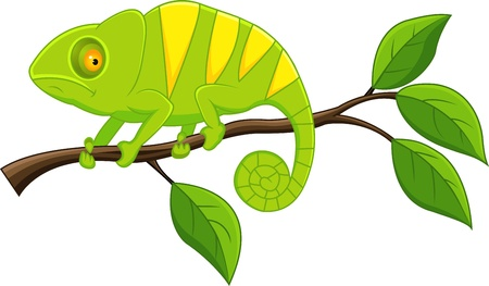 Chameleon  Stock Vector - 13393570