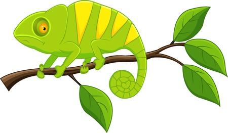 Chameleon  Stock Vector - 13393570