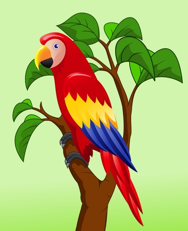 Macaw bird cartoon  Vector