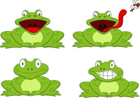 bullfrog: Funny frog cartoon
