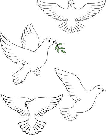 white dove: Paloma vector
