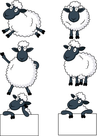 oveja: ovejas de dibujos animados