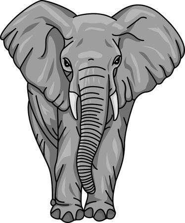 elefantes: elefante Vectores