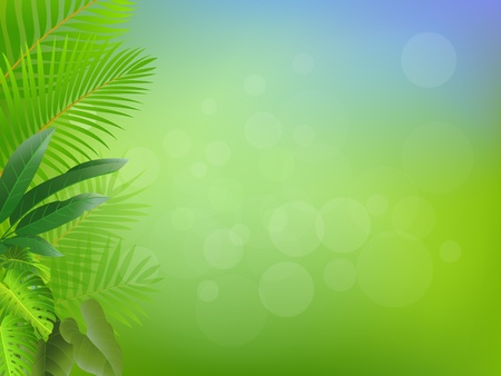 palm branch: Nature background  Illustration