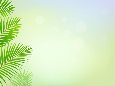 birch leaf: Palm tree frame background Illustration