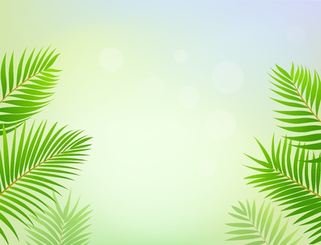 Palm tree frame background Vector