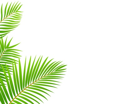 birch forest: Palm tree frame background Illustration