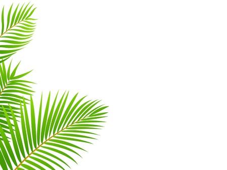 palmeras: Palmera marco de fondo Vectores