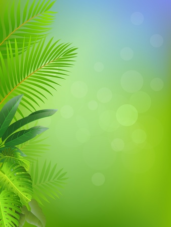 palm branch: Tropical forest background