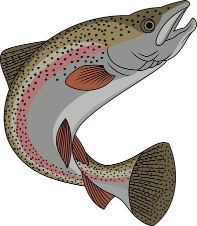 freshwater fish: Forel vissen Stock Illustratie