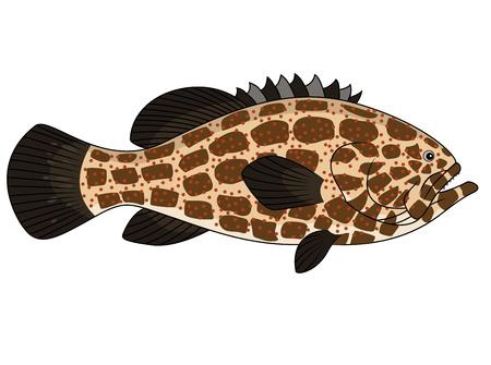 sunfish: Grouper fish Illustration