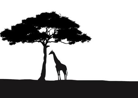tree in field: Giraffe silhouette background