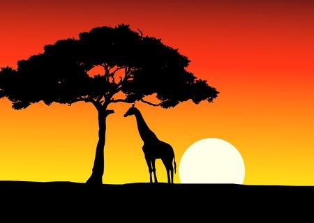 ilustraciones africanas: Atardecer de fondo de África con la jirafa Vectores