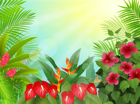 fond des forêts tropicales