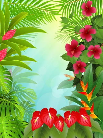 amazon rainforest: tropical forest background